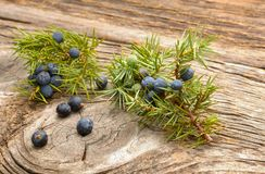 Juniper berries. On wooden background royalty free stock photography