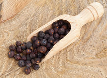 Juniper berries in wooden scoop Royalty Free Stock Image