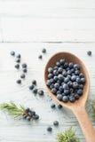 Juniper Berries. Wooden spoon with juniper berries stock image