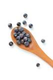 Juniper Berries Royalty Free Stock Photo