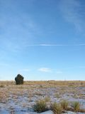 Juniper Bliss. Lonely Juniper Tree in winter royalty free stock image