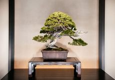 Juniper Bonsai at Omiya Bonsai Museum garden, Saitama, Japan stock image