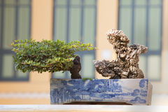 Juniper bonsai tree in the garden Royalty Free Stock Images