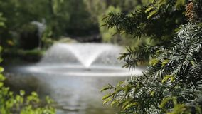 Juniper branch against the fountain in a botanical garden. In Wroclaw stock video footage