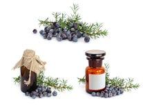 Juniper branch and berries Stock Photos