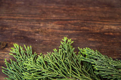 Juniper branches on wood background. Juniper branches on dark wood background Stock Photography