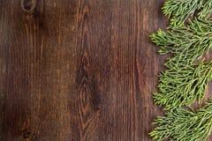 Juniper branches on wood background. Juniper branches on dark wood background Royalty Free Stock Photos