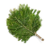 Juniper broom stock photos
