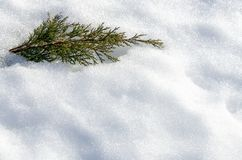 Juniper bush in deep snow. Frosty winter and sunny day stock photography