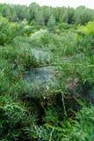 Juniper bushes in the park Sofiyivka stock photos