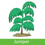 Juniper cartoon icon Royalty Free Stock Photos