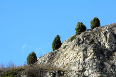 Juniper cuddly. Rare specimens of Juniper cuddly Foresto - Oasis xerothermic Susa Valley - Italy Stock Photography