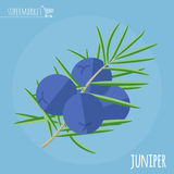 Juniper flat design vector icon. stock image