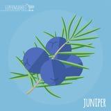 Juniper flat design vector icon. Stock Image