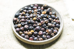 Juniper fruit. On a saucer Royalty Free Stock Image