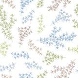Juniper graphic color seamless pattern sketch illustration. Vector vector illustration