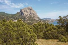Juniper grove in the mountains, a natural Park on the black sea coast. Crimea royalty free stock photography
