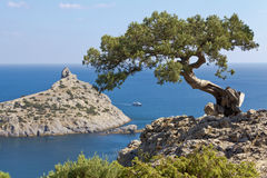 Juniper growing on a rock against the backdrop of ancient reef and the Blue Bay of the New World. Crimea stock photography