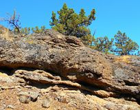 Juniper Ledge. Junipers on top of a rocky ledge at Henderson Rocks - Crooked River National Grassland - near Terrebonne, OR Royalty Free Stock Images