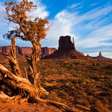 Juniper in Monument Valley Stock Photography