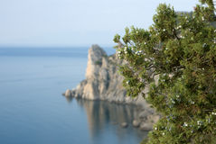 Juniper over Crimea coast Stock Photography