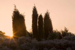Juniper and the rising sun Royalty Free Stock Photos