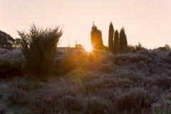 Juniper and the rising sun Stock Image