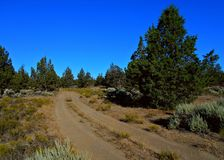 Juniper Road. Trail through the juniper wilderness east of Redmond, OR royalty free stock photography