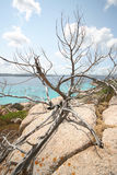 Juniper on rocks, Spargi Island (Sardinia - Italy) Royalty Free Stock Photos