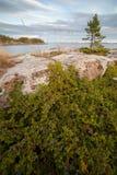 Juniper on seacoast Stock Photos