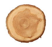 Juniper slice. Isolated juniper round slice at white background Stock Photo