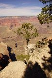 Juniper snag, looking north over the Grand Canyon Stock Image