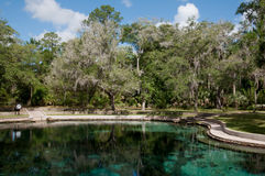 Juniper Springs Royalty Free Stock Images