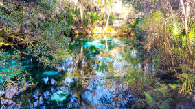Juniper Springs, FL imagem de stock