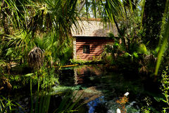 Juniper Springs Florida Royalty Free Stock Image