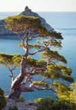 Juniper tree. On rock and sea with Capchik cape behind (Novyj Svit reserve, Crimea, Ukraine stock image