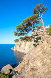 Juniper tree. On rock (Novyj Svit reserve, Crimea, Ukraine royalty free stock photo