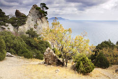 Juniper tree. On rock and sea (Novyj Svit reserve, Crimea, Ukraine Stock Photos