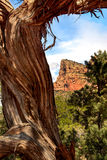 Red Rocks Sedona Stock Images