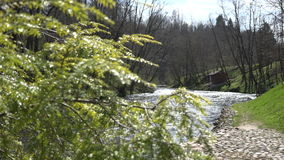 Juniper tree branch and flowing river water. Focus change. 4K. Closeup of juniper coniferous tree branch move in wind and sun reflections on flowing river water stock video footage