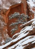 A juniper tree covered with snow grows on a red sandstone slope with an arch in the cliff behind it framing the tree.  royalty free stock image