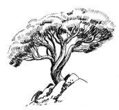Juniper tree. Ink black and white illustration of a juniper tree and rocks royalty free illustration