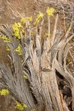 Juniper tree pattern in late afternoon. Redmond Oregon tree in late late afternoon royalty free stock photography