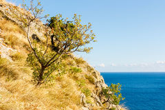 Juniper tree on rock on sea Royalty Free Stock Images
