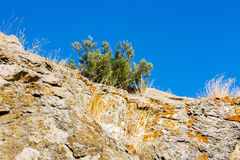 Juniper tree on rock on sea Royalty Free Stock Photography