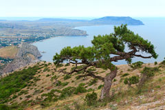 Juniper tree on rocks beach Stock Photos