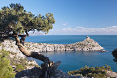 Juniper tree on rocky coast of Black sea Stock Photos
