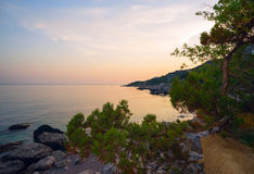 The juniper tree and  rocky shore of  Black sea in  evening . Crimea , Laspi Bay. Royalty Free Stock Image