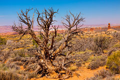Juniper Tree Sandstone Hoodoos Arches National Park Moab Utah Royalty Free Stock Photography