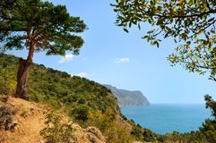 Juniper tree on the slope near the sea Stock Photography